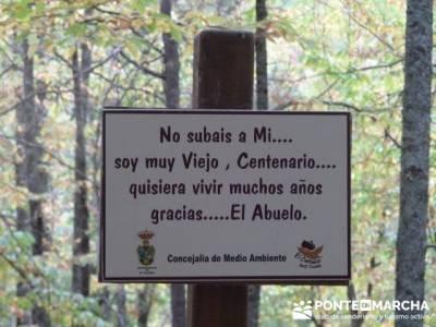 Senderismo por El Castañar de El Tiemblo - Senderismo Ávila